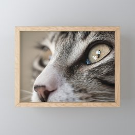 Macro Cat Framed Mini Art Print