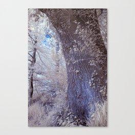 Trunk Canvas Print