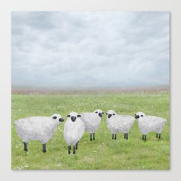 sheep and queen anne's lace Canvas Print