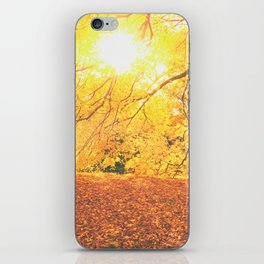 New York City Autumn Sun iPhone Skin