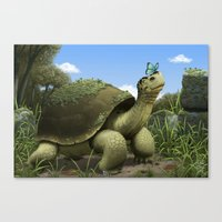 tortoise Canvas Prints featuring Tortoise by Andrew McIntosh