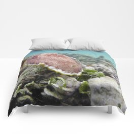 Red Nudibranch Comforters