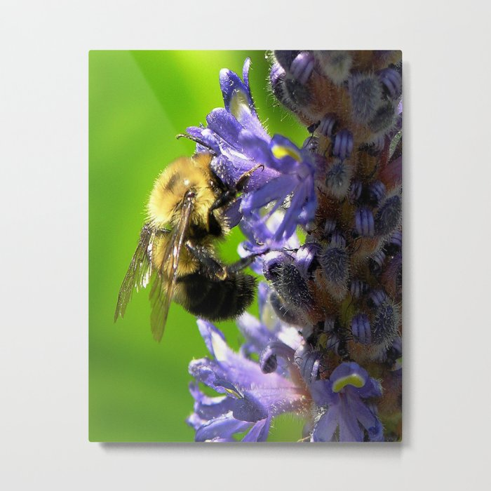 Bee all you can Bee Metal Print