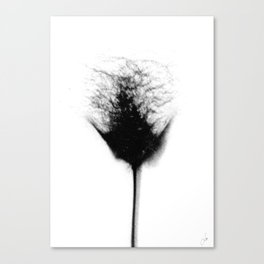 Sex Flower 2 Canvas Print