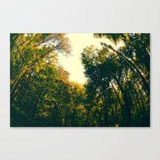 Sweet Surroundings  Canvas Print