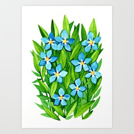 Forget-Me-Never Art Print
