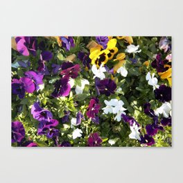 Multicolour Blooms Canvas Print