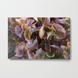 Color Tropical Metal Print