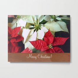 Mixed Color Poinsettias 2 Merry Christmas S1F1 Metal Print