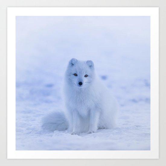 White Snow Fox Softness Art Print