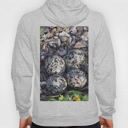 Killdeer eggs in nest Hoody