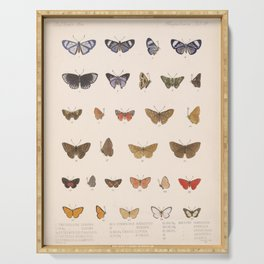 Vintage Hand Drawn Scientific Insect Anatomy Colorful Butterfly Illustration Serving Tray