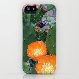 Orange Cacti iPhone Case