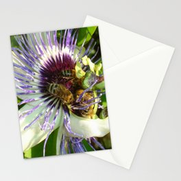 Close Up Of Passion Flower with Honey Bee  Stationery Cards