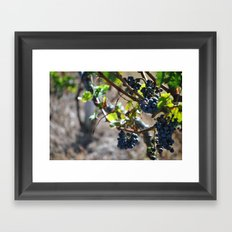 Grapes on the Vine. Framed Art Print
