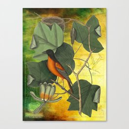 Baltimore Oriole on Tulip Tree, Vintage Natural History and Botanical Canvas Print