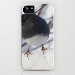 Wintery Junco iPhone Case