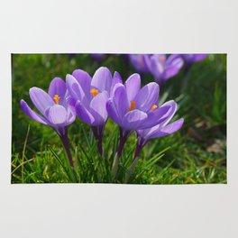 Purple Crocuses 2 Rug