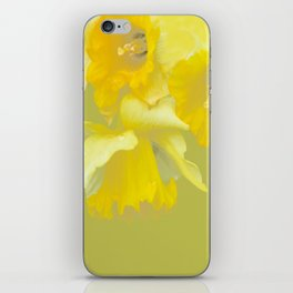 Sign of Spring - Yellow Narcissus on Spring Green Background #decor #society6 #buyart iPhone Skin