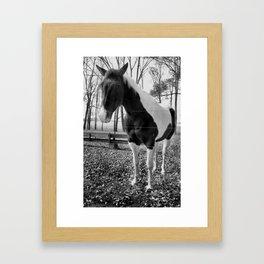 Spotted Horse (bw) Framed Art Print