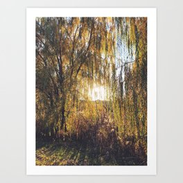 Leaning Weeping Willows at Sunset Art Print