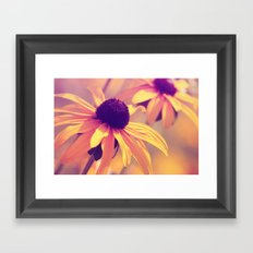 Yellow Flower - Rudbeckia Framed Art Print