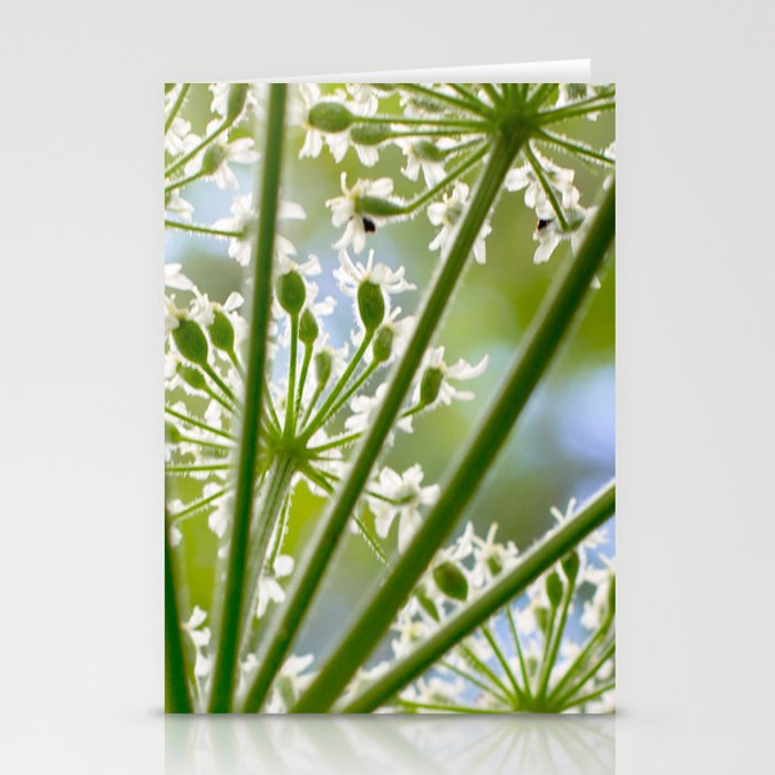 Delicate cow parsley Stationery Cards