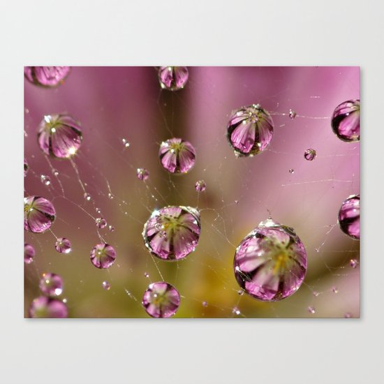 who knew a web could hold such treasures? Canvas Print