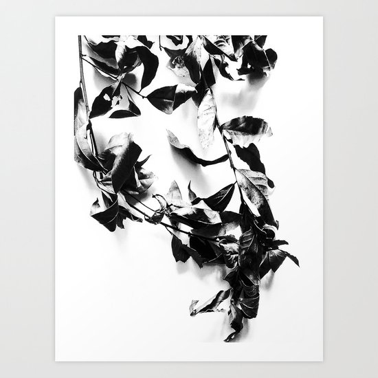 Bay leaves 4 Art Print