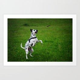 Gotta That! Kokkie. Dalmatian Art Print