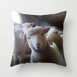 Sheep Looking at Camera Throw Pillow