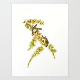 Pine Finch Bird Art Print