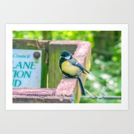 Great Tit Art Print