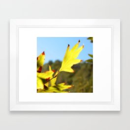 Yellow Leaf Framed Art Print