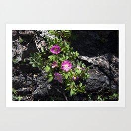 Wild Rose Phoenix Photograph Art Print