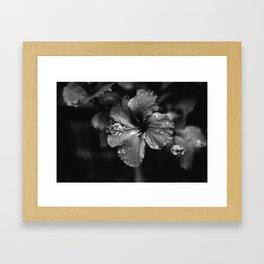 Black & White Hibiscus Framed Art Print
