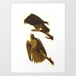 Labrador Falcon Art Print