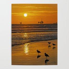 Seagull's Golden Sunset Poster