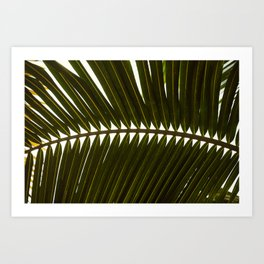 Cancun Palm Leaf Art Print