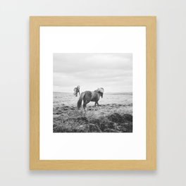 Modern Animal Print, Icelandic Horses Framed Art Print