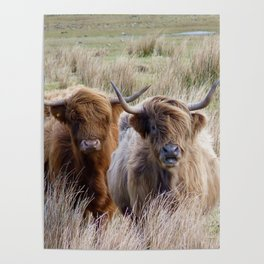 Highland Beef Scotland Poster