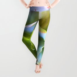Rainbow Succulent Leggings
