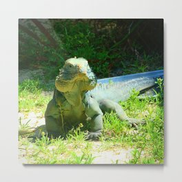 Iguana and Chill Metal Print