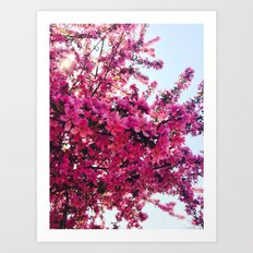 Apple Blossom-2014 Art Print