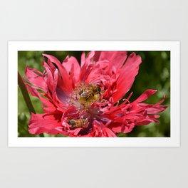 Pollenation Art Print
