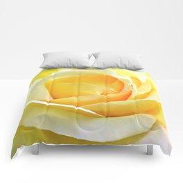 Peace Rose Comforters