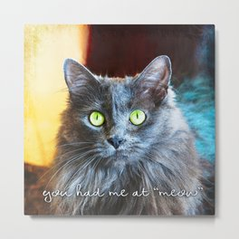 """You had me at 'meow'"" quote cute, fluffy grey cat close-up photo Metal Print"