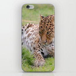 Leopard 2 iPhone Skin