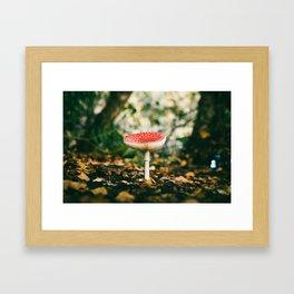 Holme Woods 6 Framed Art Print