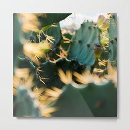 Sunbathing Cacti Metal Print